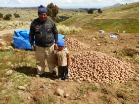 Don Tomas Rojas harvesting potatoes in Sancayani with his grandson.