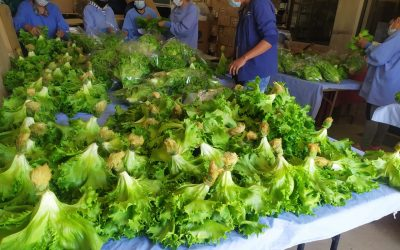 Hydroponic Lettuce, Fodder, and Livestock at the CEA: Agricultural Experiments in 2020