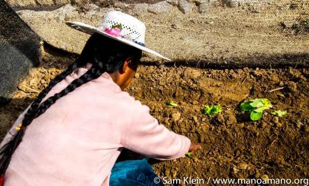 A farmer plants lettuce seeds for the first time.
