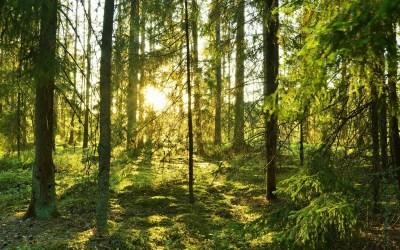 Bain de forêt, en connaissez-vous tous les bienfaits ?