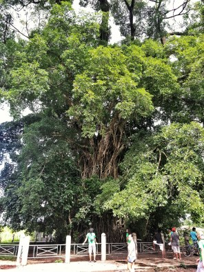 Old Balete Tree