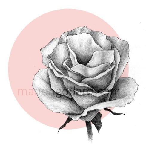 Illustration/dessin d'une rose au crayon à papier