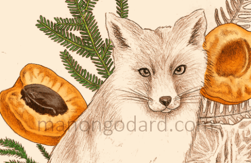 "Illustration ""Renard et fruits"" par Manon Godard - En cours"