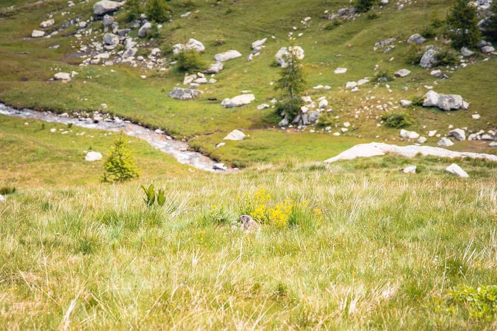 road-trip-alpes-haute-provence-col-de-la-cayolle