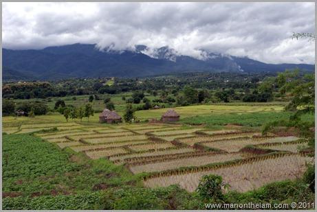 Pai, Thailand Rice Field