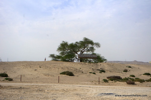 Tree of Life Bahrain 002