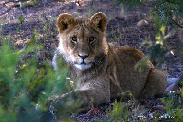 Gondwana Game Reserve South Africa 196