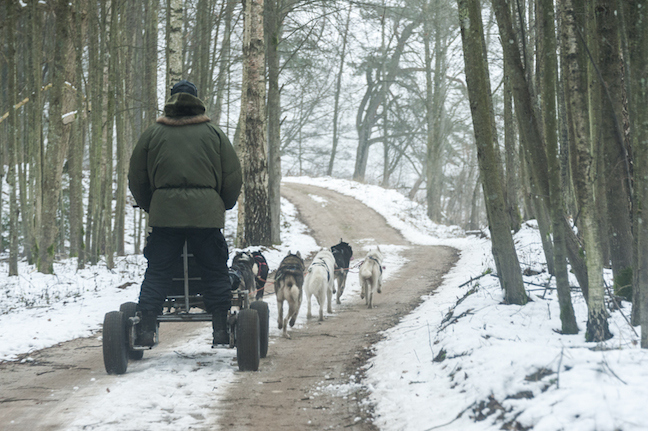Man On The Lam Top 100 Travel Blog Posts of 2015 so far by social media shares  Lithuania Dogs Down Hill II