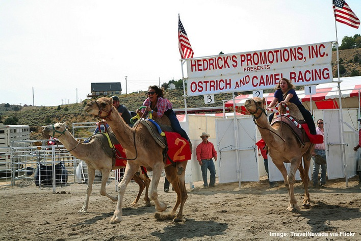Ostrich and Camel Racing Virginia City Nevada