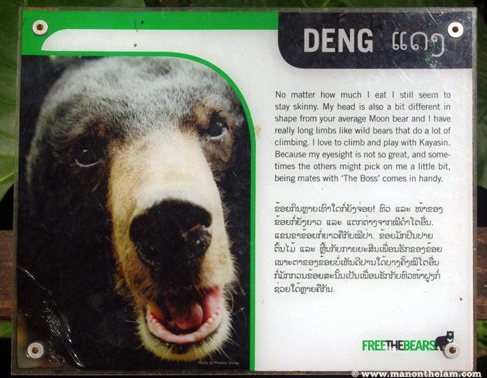 Free the Bears Laos Rescue Centre Deng the Moon BearJPG