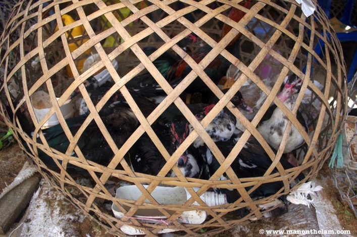 Phonsavan market Laos ducks in wicker cage