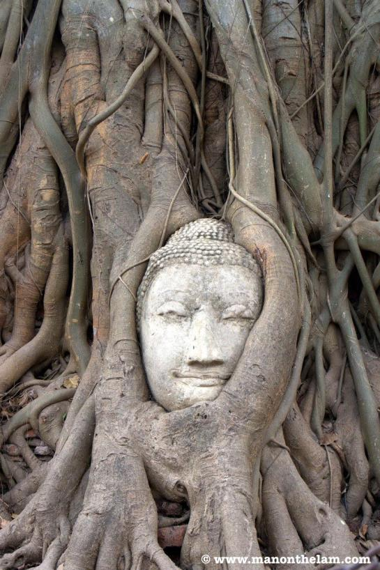 Ayutthaya, Thailand Buddha head in tree.jpg