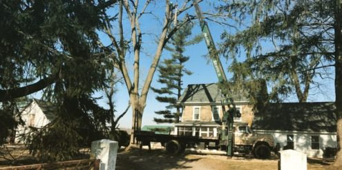 Manor Tree Service on project site