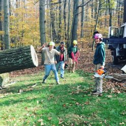 Manor Tree Service employees on site
