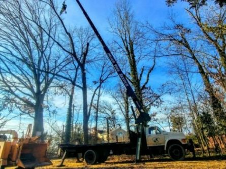 Manor Tree Service Crane - tree cutting