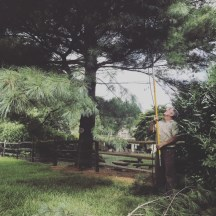 Mike Connell - Manor Tree Service