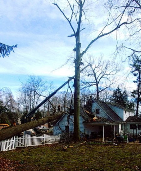 Tree service for damage on house