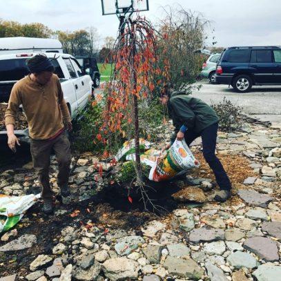Tree Planting - Manor Tree Service