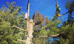 Tree Pruning- Manor Tree Service