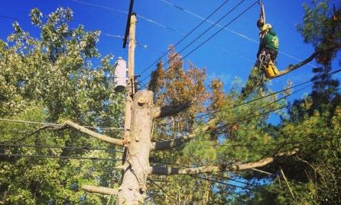 Tree Pruning- Manor Tree Service