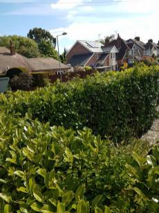 Doing the annual hedge cutting and bushes(after)