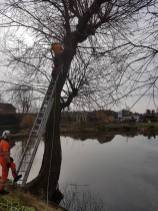 Pollarding a willow over a massive pond 2