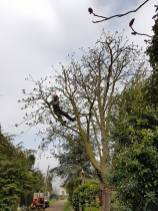 Reducing & thinning a horse chestnut6