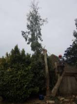 take down eucalyptus3
