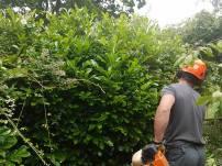 Reducing Poplar Tree 15