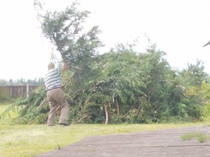 Reducing in height leylandii trees - Tillingham 6