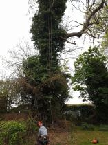 Taking a massive branch off of a Ash Tree in the church 1
