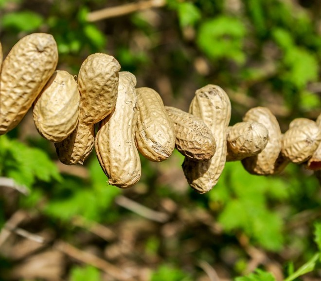 New Blood Test Detects Peanut Allergy with 98% Specificity