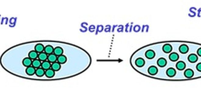 Pigment Dispersion and Stabilization