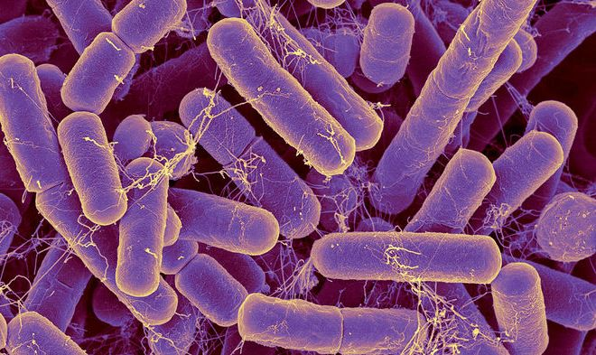 The bacteria in your gut may reveal your true age