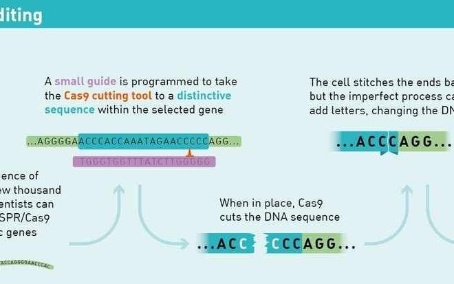 Scientists crack the CRISPR code for precise human genome editing