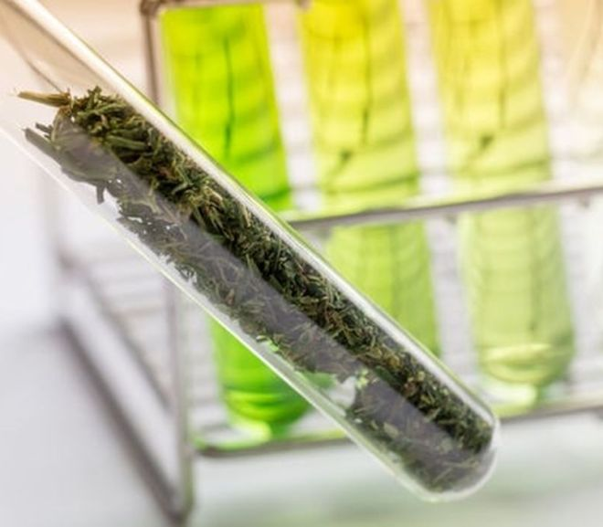 FDA Begins Evaluating Cannabis Scientifically