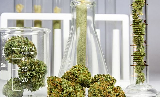 Analytical Instruments You Need to Start a Cannabis Testing Laboratory