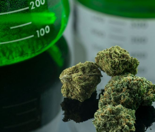 The Budding Potential of Cannabis Extraction in Europe