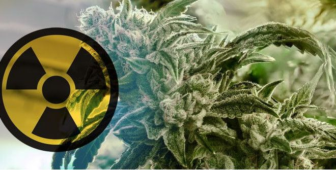 Gamma irradiation on cannabis; a controversial topic