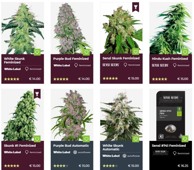 Cannabis Seeds – SALE