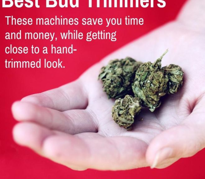 Best Bud Trimmers—Top Trimming Machines of 2019
