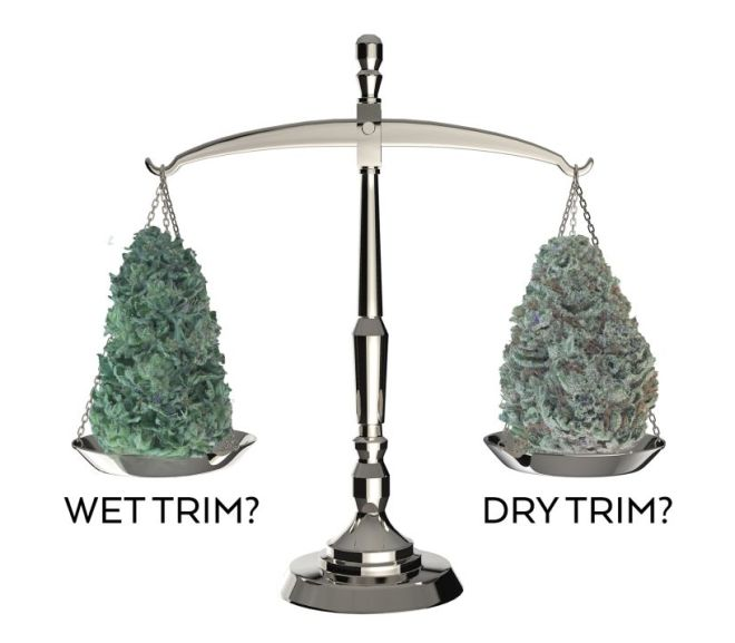 Wet Trimming Vs Dry Trimming