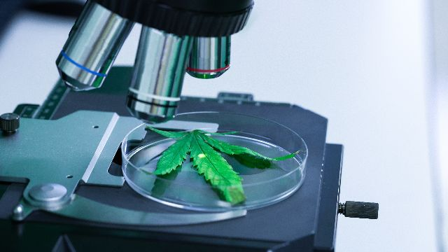 Daily Cannabis Use Can Drive HPV-Related Tumor Growth, Study Finds