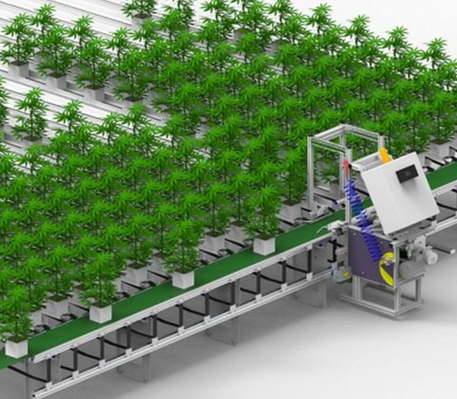 Intelligent Automation for Consistent Cannabis