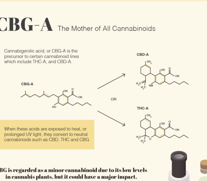 Visualizing the Huge Potential of Minor Cannabinoids