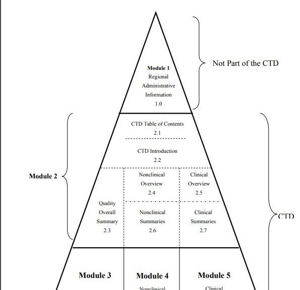 Diagrammatic Representation of the Organization of the CTD