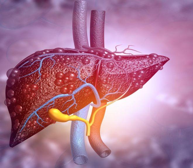 CBD liver study to inform FDA regulation