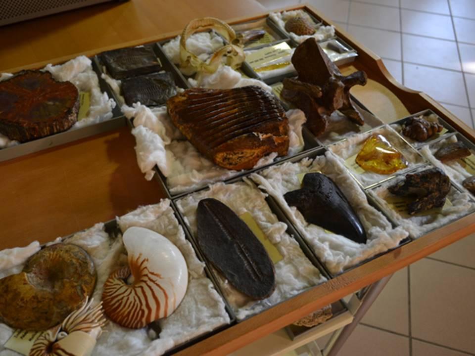 laboratori museo di storia naturale