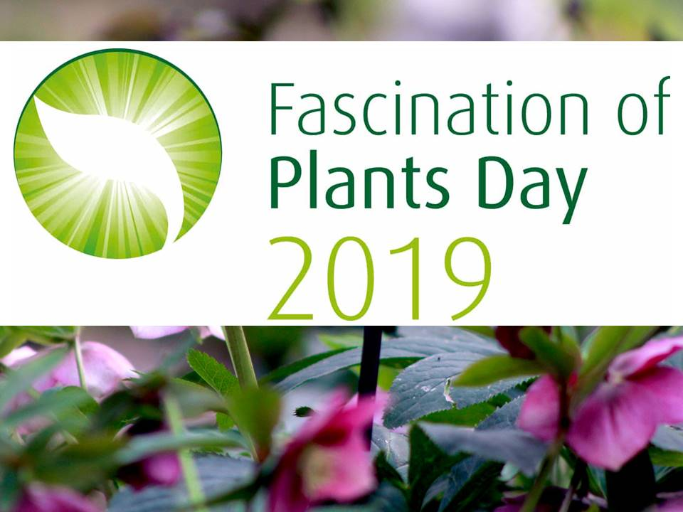 fascination of plants days