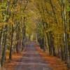 福岡白野江植物公園紅葉の時期2017!見ごろやオススメスポット情報